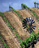 windmill in spring vineyard