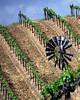 windmill in spring vineyard
