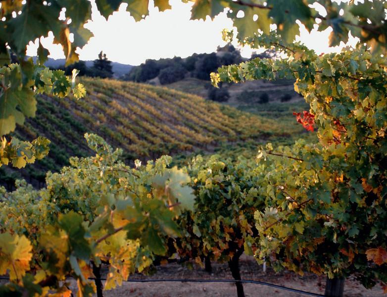 vineyard framed