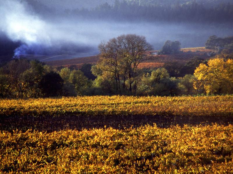 fall vineyard smoke