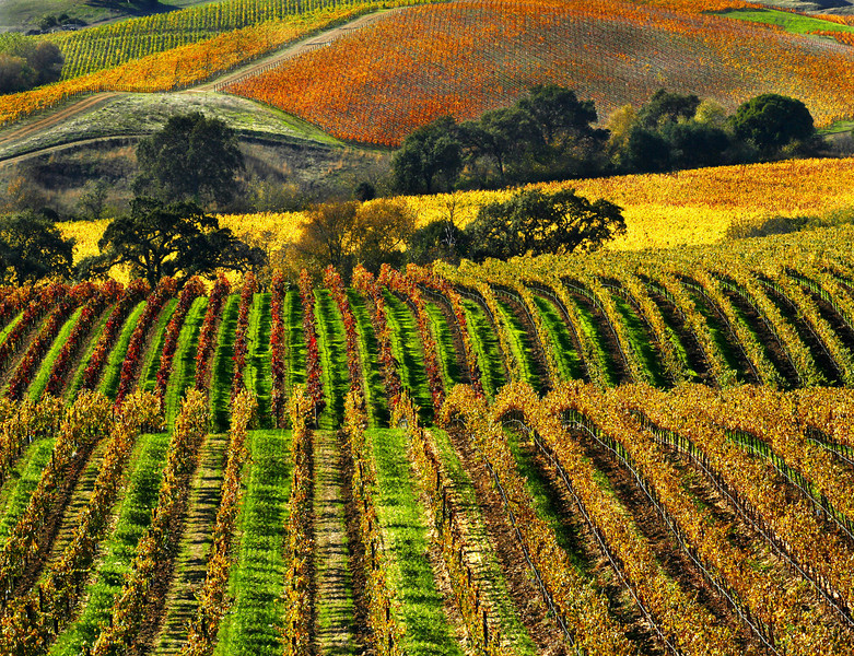 fall vineyard 27