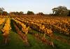 fall vineyard barn 6