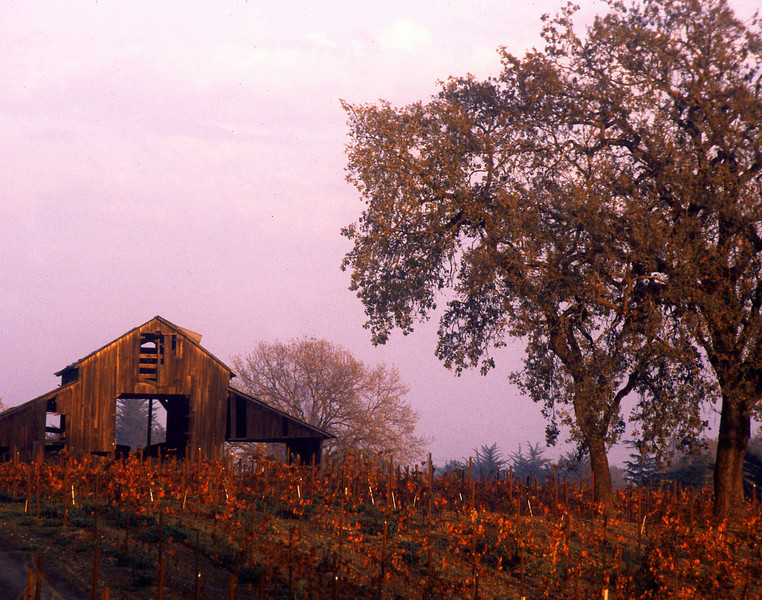 fall vineyard sunset and barn