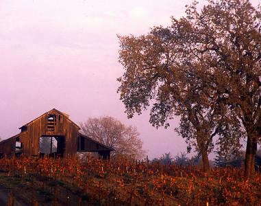 fall vineyard sunset and barn