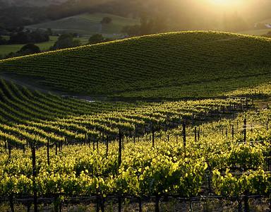 spring vines at sunset