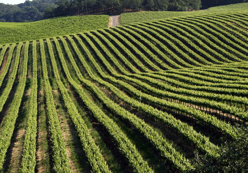 above summer vineyards
