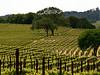 spring vineyard 3