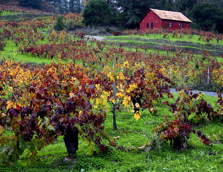 red barn fall vineyard