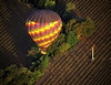 balloon over vineyard
