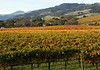 fall vineyard and hillsides 3