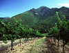 summer vines mt st helena