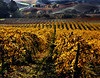 fall vineyard carneros