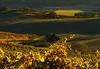 fall vineyard sunset 9