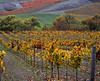 fall vineyard carneros 5