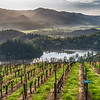 Napa Wine Country