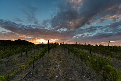 McPrice Myers vineyard.