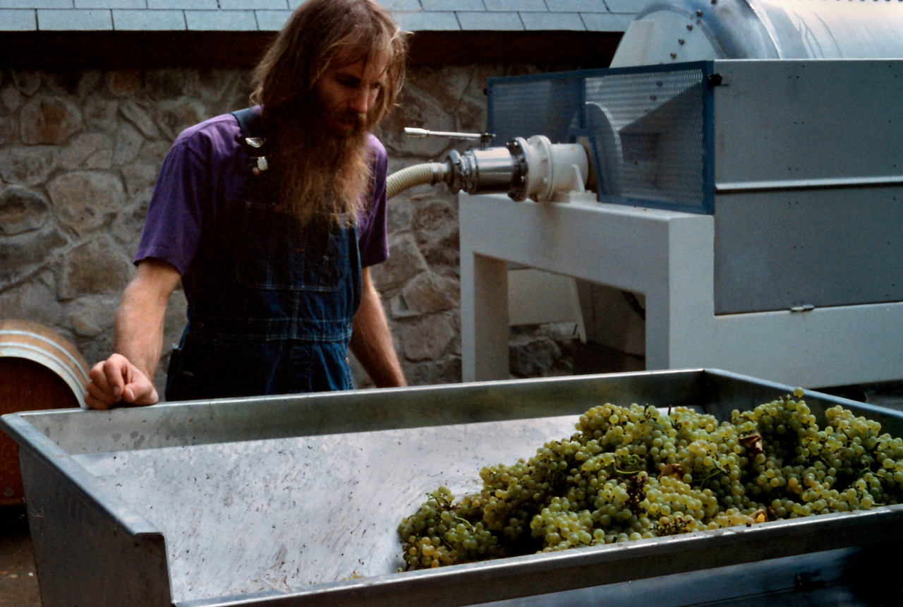 The winemaker supervising the crush of Chardonnay grapes, West Park Winery, Hudson Valley, New York state, c.1987