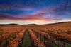 ~ Harvest's End ~