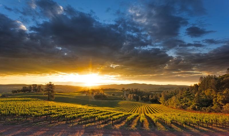 ~ The Vigilant Dawn ~  Sunrise over Vigilance Vineyards