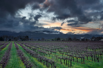 - Storm Breaker -  Rutherford area of Napa Valley