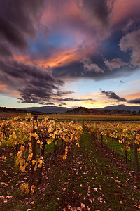- The Ephemeral Divergence -  Oakville District of Napa Valley
