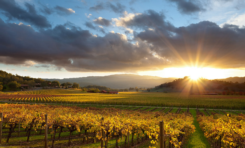 ~ Golden Light ~  Screaming Eagle Winery in Oakville District of Napa Valley