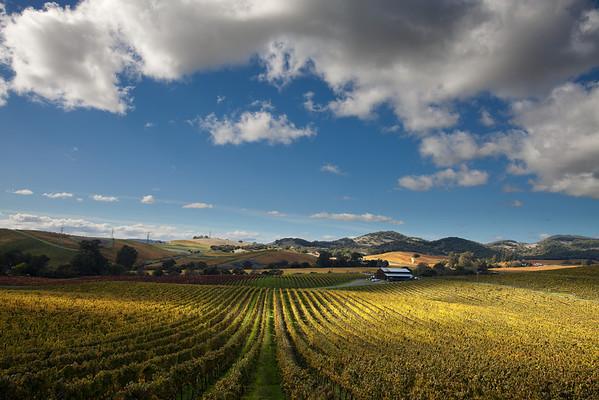 - Vintage Autumn -<br /> <br /> Carneros District of Napa Valley