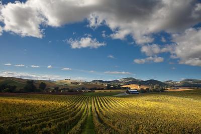 - Vintage Autumn -  Carneros District of Napa Valley