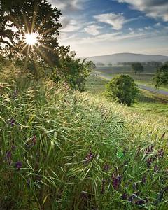 Splendor in the Grass - Pope Valley Morning.