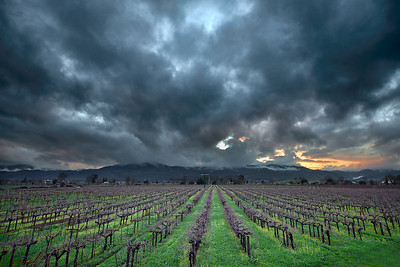 - Vines & Storms -  Rutherford area of Napa Valley