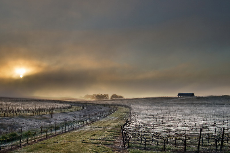 Of Fog and Frost