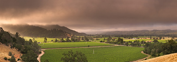 ~ Golden Vineyard View ~  Panorama view looking south at extreme north Napa Valley
