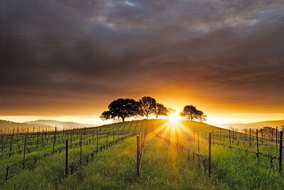 ~ A New Beginning ~  Sunrise in Pope Valley area of Napa County