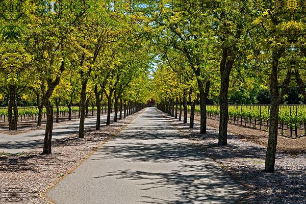 Sterling Winery - Calistoga, CA