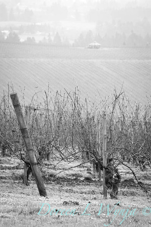 Arterberry Maresh Vineyards_124