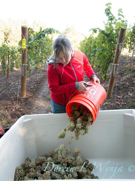 Nemarniki vineyards harvest_0263