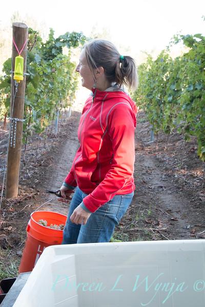 Nemarniki vineyards harvest_0260