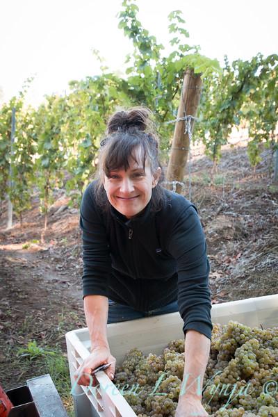 Nemarniki vineyards harvest_0271