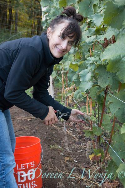 Nemarniki vineyards harvest_0256