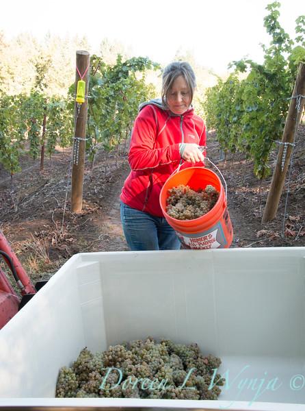Nemarniki vineyards harvest_0261