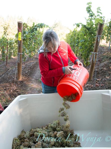 Nemarniki vineyards harvest_0264