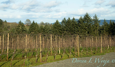 Durant vineyard with winter canes_8531