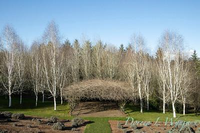 Wisteria arbor - Betula utilis var  jacquemontii at Red Ridge_8534