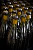 Waxing Pinot Noir_2039