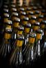 Waxing Pinot Noir_2041