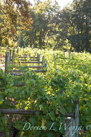 In the vineyard_305