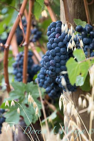 In the vineyard_314