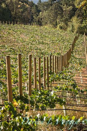 In the vineyard_322