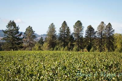 In the vineyard_320