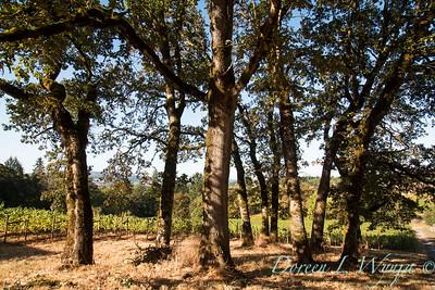In the vineyard_301
